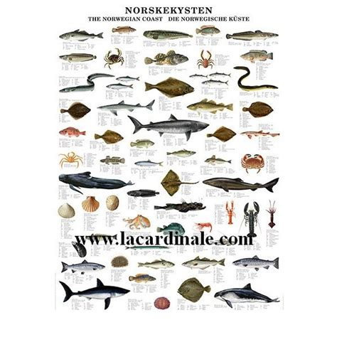 Poster Côte Norvégienne - The Norwegian Coast - Librairie