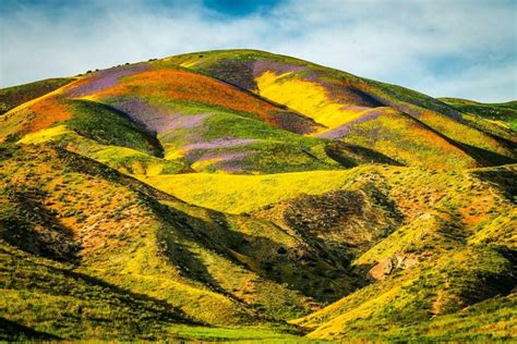 Slideshow: Your pics of California's Super Bloom | 89
