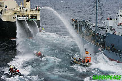 Greenpeace activists clash with Japanese whaling fleet in