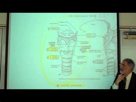 ANATOMY; RESPIRATORY SYSTEM; PART 1; Upper Tract; Nose