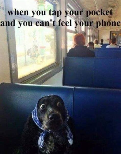 12 Funny Images That Dog-Lovers Will Adore