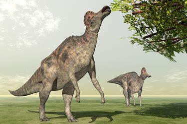 The biggest clue to what dinosaurs ate is their teeth