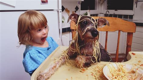 Is Pasta Good for Dogs? | Reference