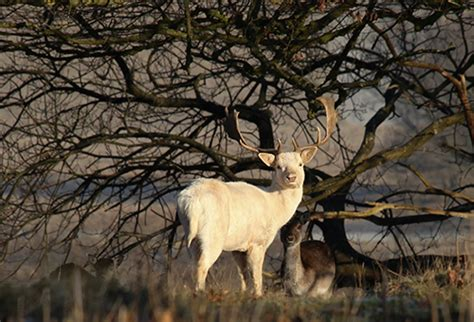White, Wild Animals and Why Difference Shouldn't Be Wrong