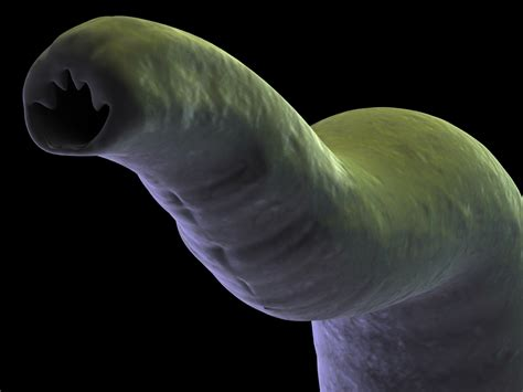 Viking worm infestations caused genetic changes that have