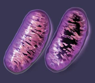 Mitochondrial Collateral Damage - Which Substances Cause It?