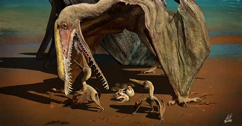 Hundreds of Fossilized Pterosaur Eggs Uncovered in China
