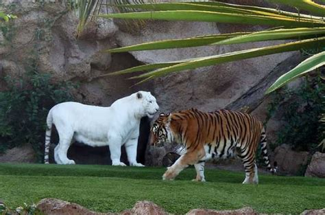Rare Albino Animals That Don't Need Colors To Look Cool