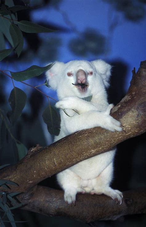 40 Extremely Beautiful Pictures of Albino Animals