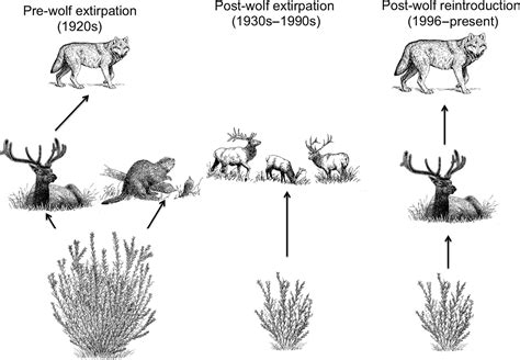Ecosystem context and historical contingency in apex