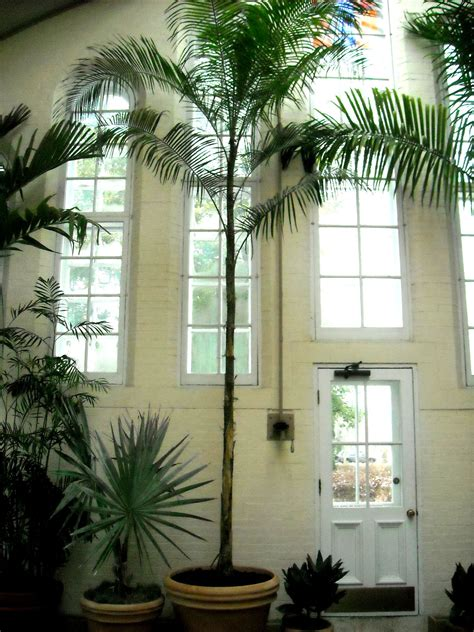 Palm Piper House, Walter Knoll Florist Client, Exotic Palm