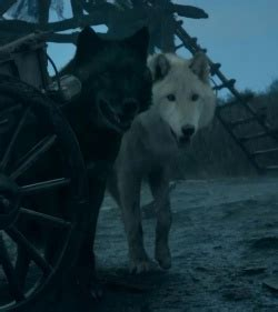 Shaggydog - A Wiki of Ice and Fire